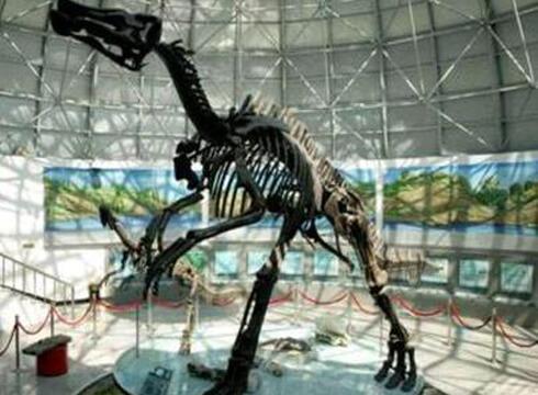 山东诸城恐龙博物馆详细图