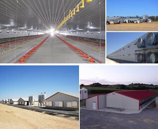 Portal Steel Structure Breeding Shed